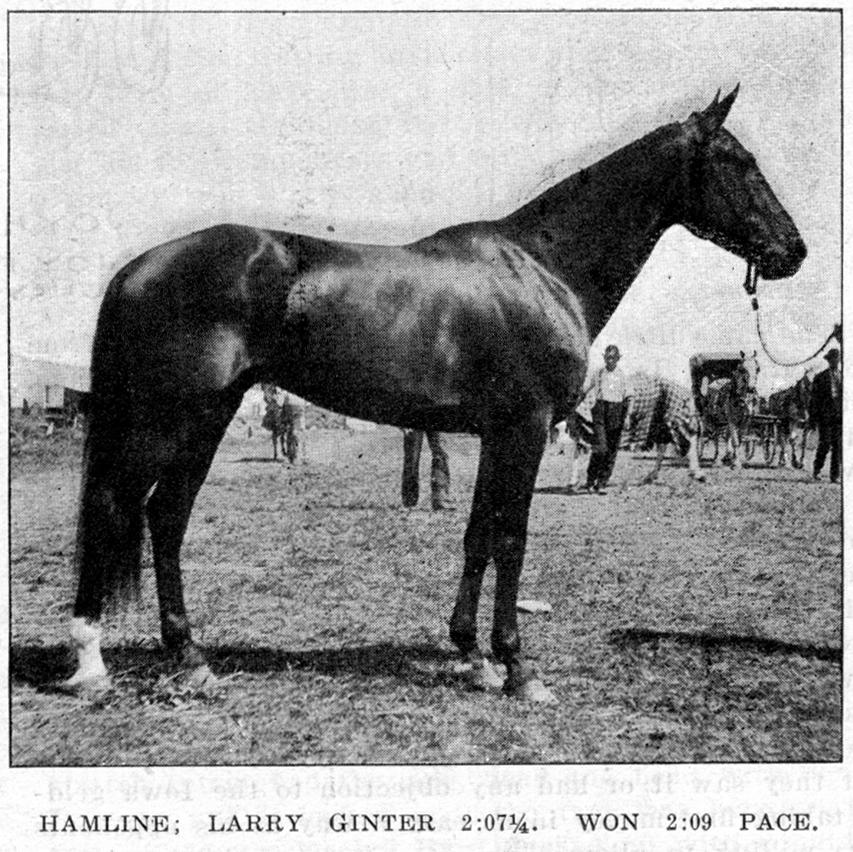 Larry Ginter in The Horse Review