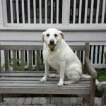 Nellie bench