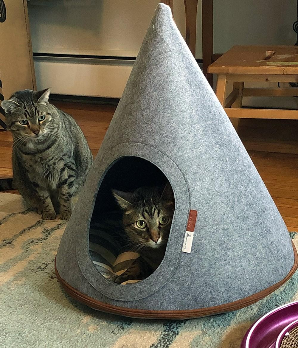 cat in a teepee made for cats