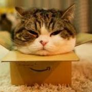fat brown and white cat squished into small, narrow box